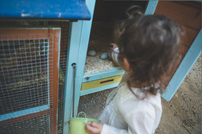 little girl collects eggs - family documentary photography