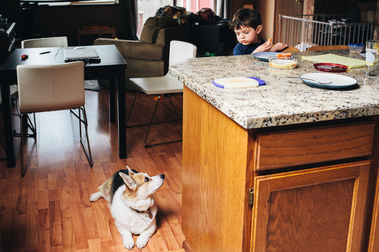 Dog waits for boy to drop food - Family Documentary Photography