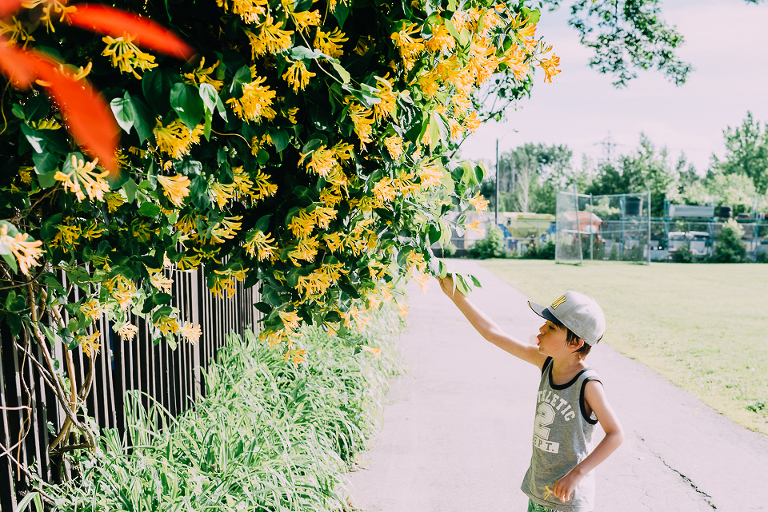 boy stops to look at yellow flowers