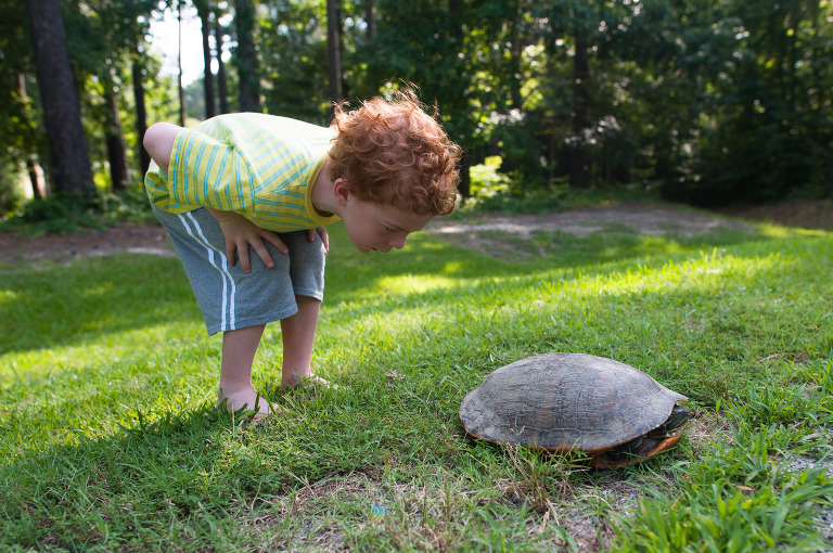 boy looking at turtle