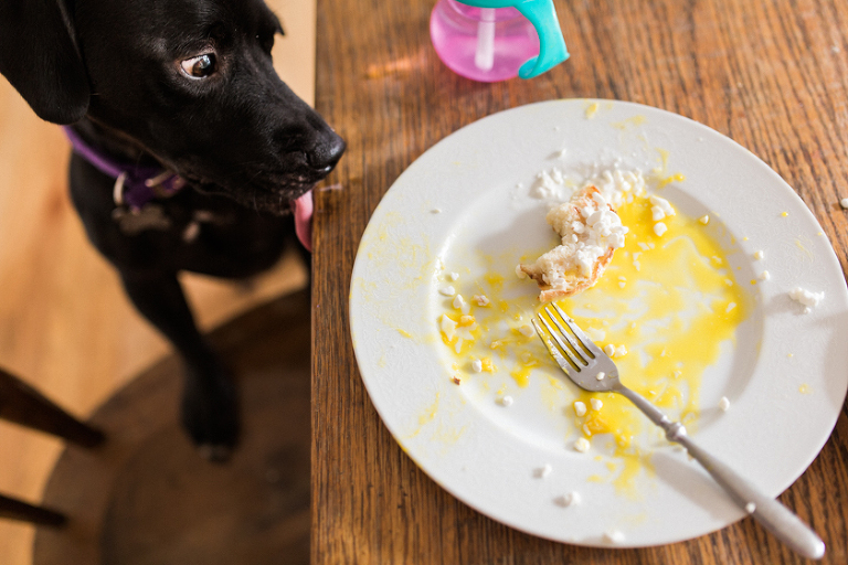dog staring at meal scraps - family documentary photography
