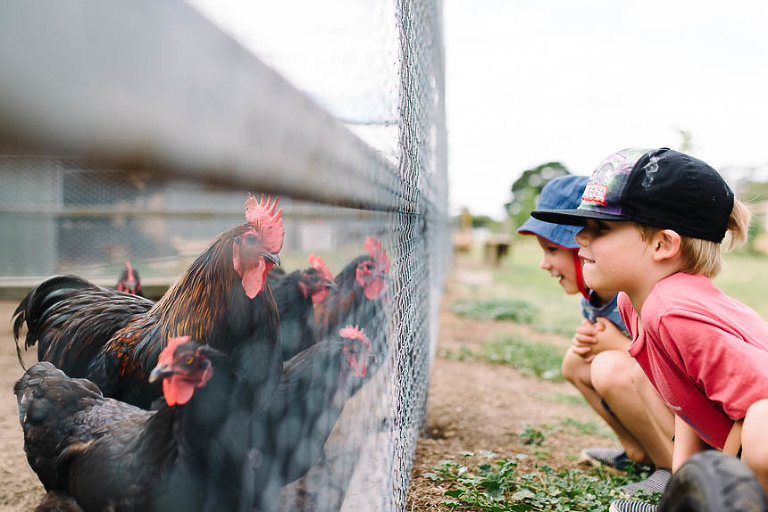 kids look at chickens - Documentary Family Photography