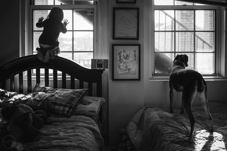 child and dog look out windows - Documentary Family Photography