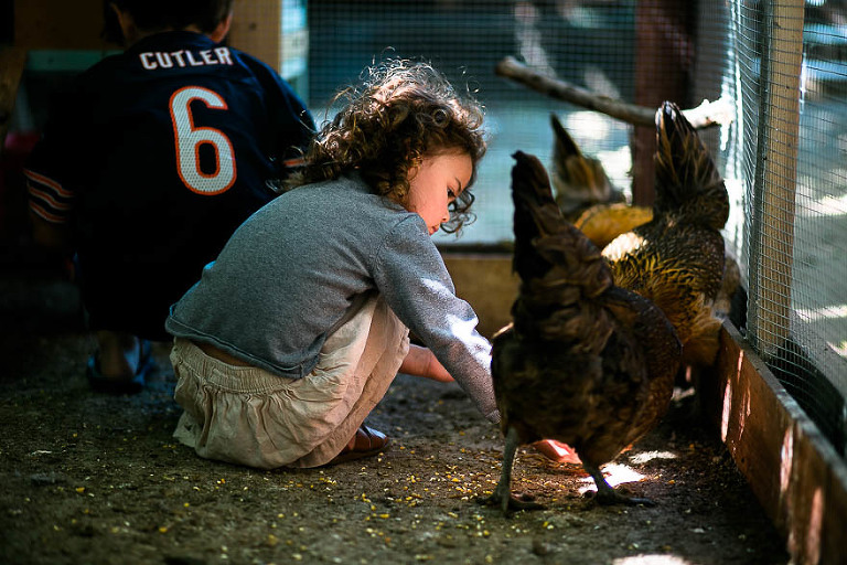girl with chickens - Documentary Family Photography