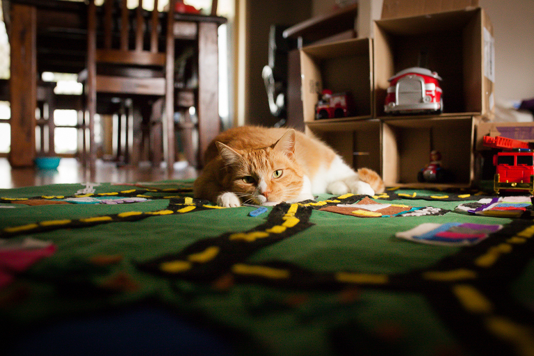 cat on play rug - Documentary Family Photography