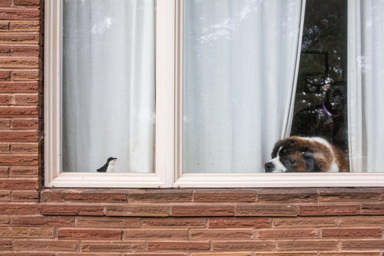 dog in window - Documentary Family Photography