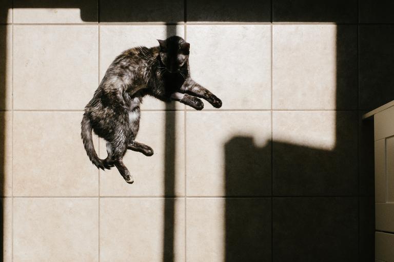 sick cat in sunlight