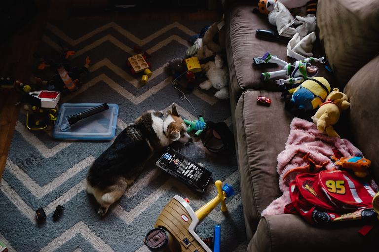 dog asleep amongst toys