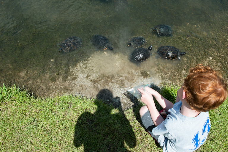 boy with turtles - Documentary Family Photography