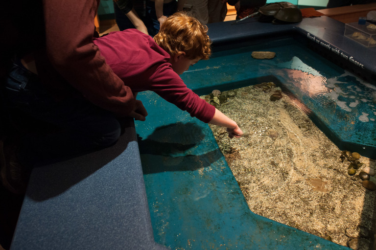 boy at touch tank - documentary family photography
